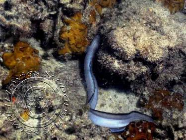 how to catch conger eels from the shore